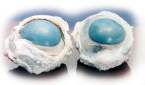 Preserved Beef Cow Eyes, Plain, (10)