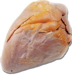 Preserved Cow Heart, Plain, Vacuum Packed