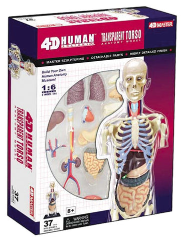 4D Master Human Anatomy - Transparent Human Torso Model