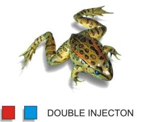 "Preserved 4.5-5.5"" Grassfrog, Double Inj, Pack of 10"