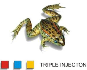 Preserved 3.5-4 inch Grassfrog, Double Inj, Pack of 10