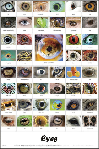45 Images of Different Eyes Laminated Poster 26 x 36