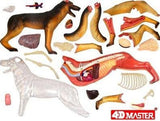 4D Vision Dog Anatomy Model 3D CutAway Puzzle