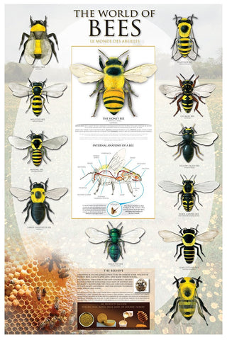 The World of Bees Insect Poster - 24x36 inches by Eurographics