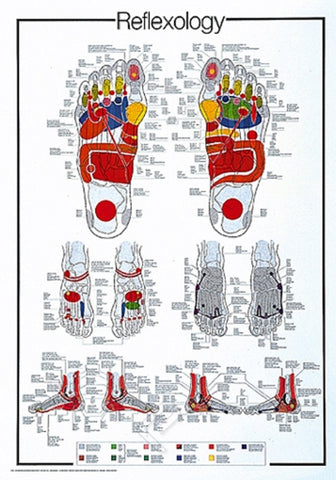 Human Reflexology of the Foot - Anatomical Poster, 26x38