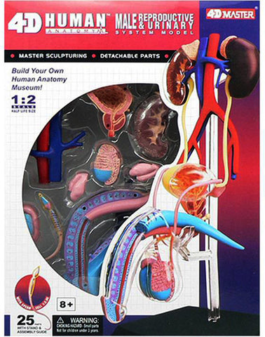 4D Human Anatomy Visable Male Reproductive System-Model 3D CutAway Puzzle