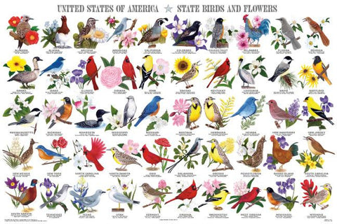 Beautiful Laminated State Birds And Flowers Poster 24x36