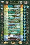 Eras of Life Poster 24x36 Illustrated Geological Chart NEW EDITION!