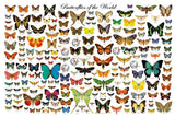Laminated Beautiful Butterflies of the World Poster 24x36