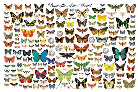 Beautiful Butterflies of the World Poster 24x36