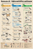 Insect Identification Poster 24x36