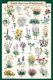 Laminated North American Wildflowers Poster 24x36