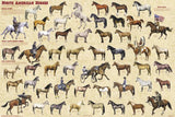 North American Horses Poster 24x36 Equine History