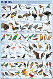 Laminated Bird Orders Poster 24x36 New Classifications