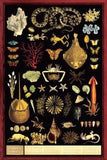 Curiosity Cabinet Poster 24x36