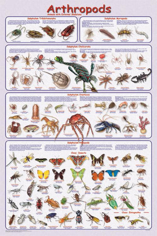 Arthropods Poster 24x36 Easy to Use