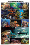 Beautiful! Laminated Coral Reef Wildlife Poster 24x36 Photo Montage