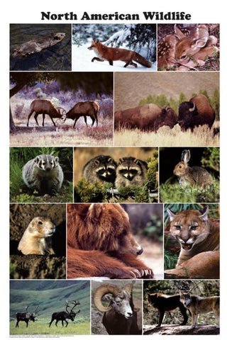 North American Wildlife Poster 24x36 Photo Montage