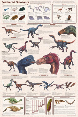 Laminated  Feathered Dinosaurs Poster 24x36
