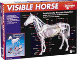 Visible Horse Model Kit 14in x 12in