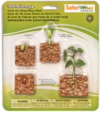 Life Cycle of a Green Bean Plant - 4 Piece Safariology Set