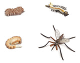 Life Cycle of a Mosquito - 4 Piece Safariology Set