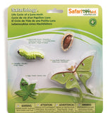 Life Cycle of a Luna Moth- 4 Piece Safariology Set