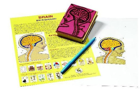 Anatomy of the Human Brain Rubber Stamper Set: 1 Stamp and Teachers Guide