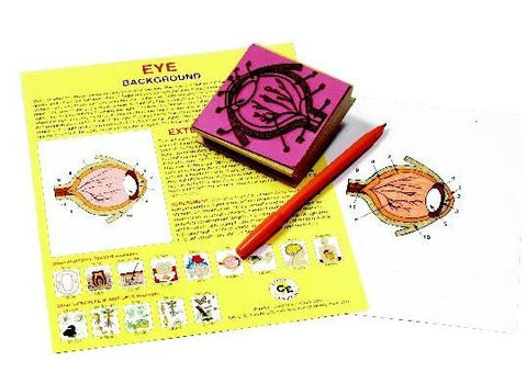 Anatomy of the Human Eye Rubber Stamper Set: 1 Stamp & Teachers Guide