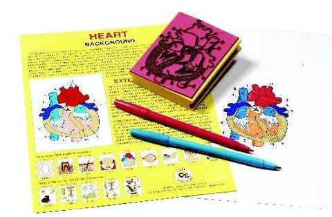 Anatomy of the Human Heart Rubber Stamper Set: I Stamp and Teachers Guide