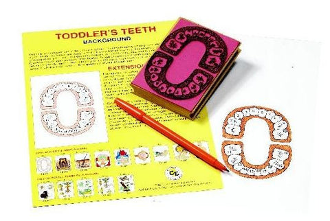 Anatomy of Toddler's Teeth Rubber Stamper Set: 1 Stamp & Teachers Guide