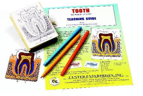 Anatomy of the Human Tooth Rubber Stamper Set: 1 Stamp & Teachers Guide