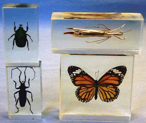 Acrylic Plastic Specimen Embedments: Four Insect Set
