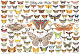 Laminated Moths of the World Poster 24x36 Lepidoptera