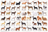 Dogs of the World Poster 24x36 Canis lupus familiaris