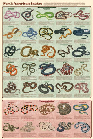 Laminated North American Snakes Poster 24x36