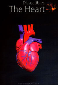 Dissectibles CDROM Anatomy Series: The Heart