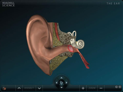 Dissectibles CDROM Anatomy Series: Human Ear Dissection