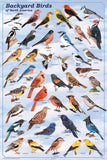 Laminated Backyard Birds Poster 24x36 Shows Different Plumage For Male & Female
