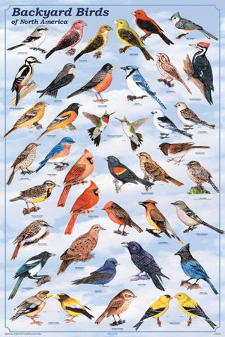 Backyard Birds Poster 24x36 w/Different Plumage For Male & Female