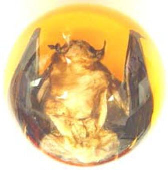 Real Bat Embedment in Medium Acrylic Sphere 2.1-2.3 Inches
