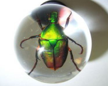 Real Green Rose Chafer Beetle (Closed Wing) Embedment in Small Acrylic Sphere 1.5 Inches