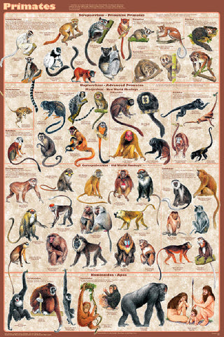 Mammals Educational 4-Poster Set, Laminated
