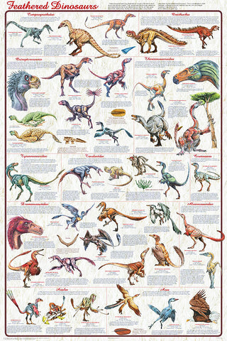 Feathered Dinosaurs version 2 Laminated Poster 24x36