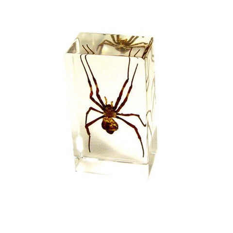 Ambor Spider Paperweight - Real Insect Encased in Acrylic 72x40x24