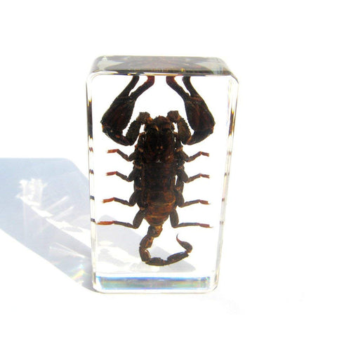 Ambor Black Scorpion Paperweight - Real Insect Encased in Acrylic 72x40x24