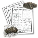 Barn Owl Pellet - Small: .75 - 1.25 Inches - 1 Pellet with Bone-Sorting Chart