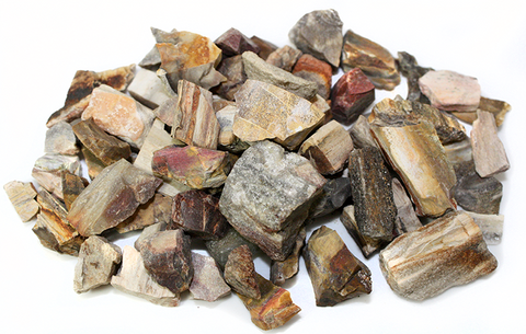 Petrified Wood Chips, Permineralized Tree Fossils - 8 Ounces (Approx 50 Pc)