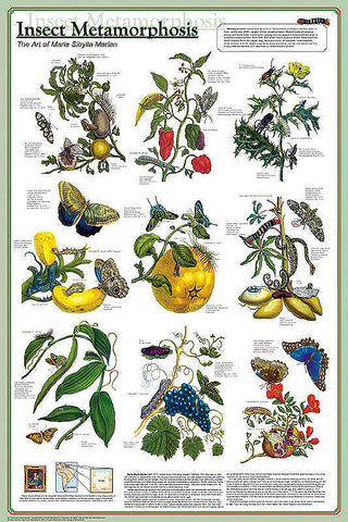 Insects Educational 4-Poster Set, Laminated