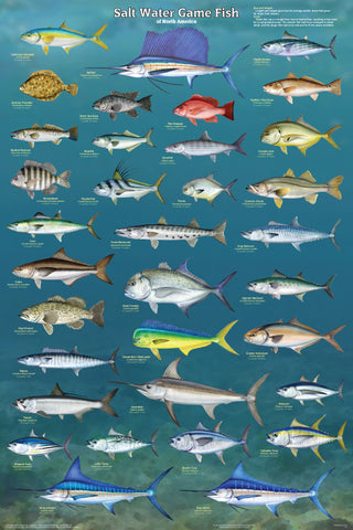 Salt Water Game Fish Laminated Poster 24x36